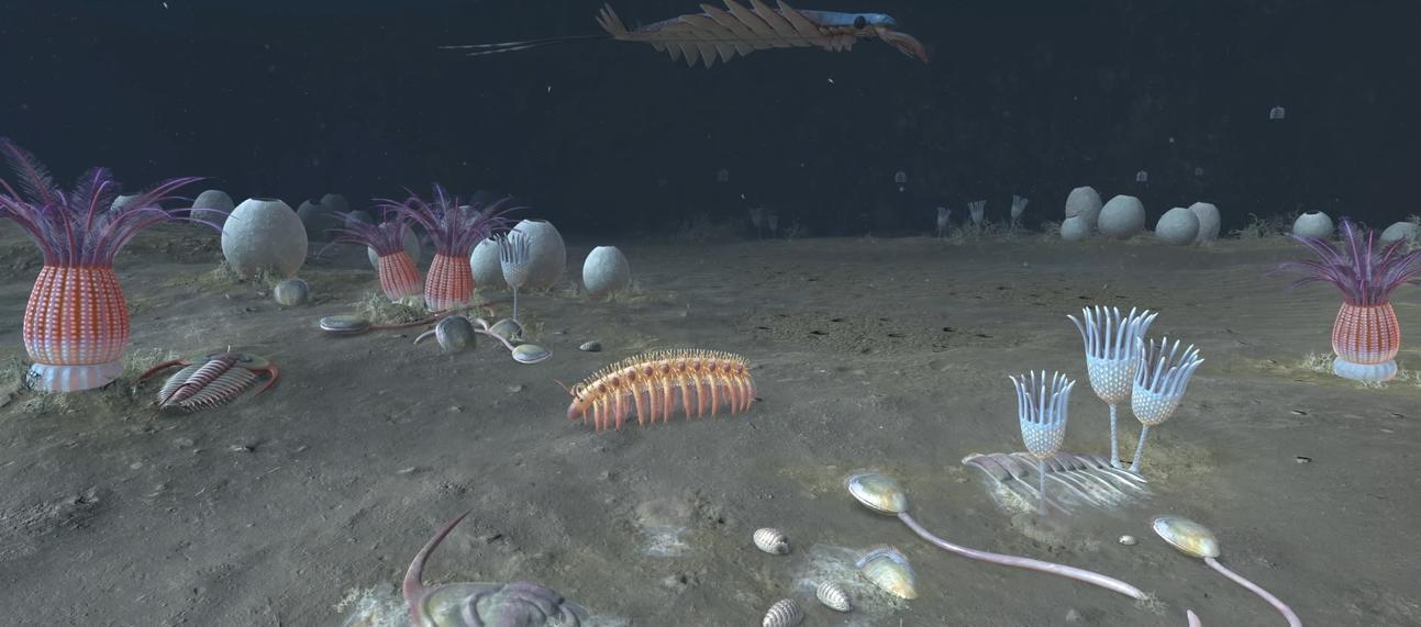 cambrian scene video poster 1920x1080