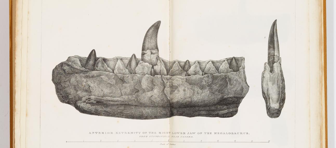 plate megalosaurus