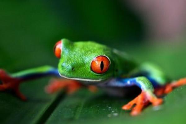 amphibian 390x390
