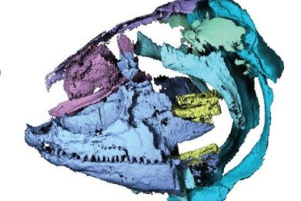 polypterid skull 0 e1505393020776 390x390