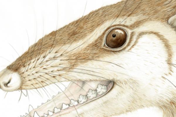 wareolestes rex byelsa panciroli 390x390