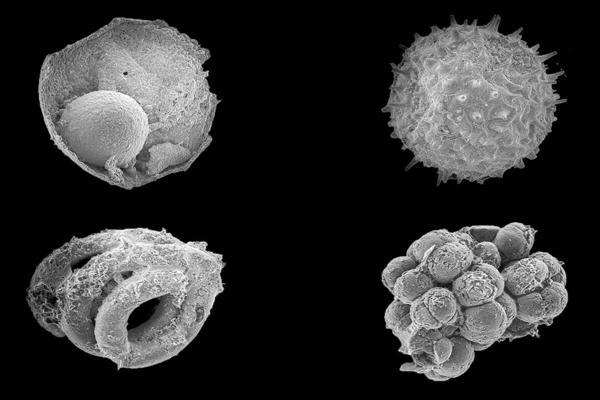 ynews 4 microfossils